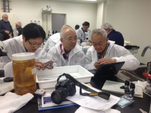 CC Lu (Right) and his colleagues from Taiwan examine preserved octopus specimens