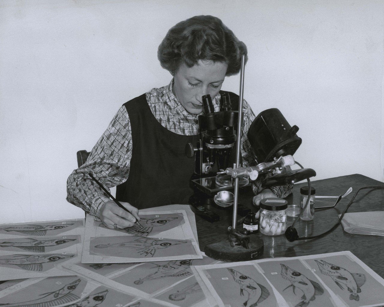 NAV drawing larvae 1954